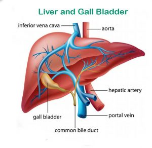 Kidney and Liver Cleanse